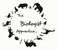 The Biologist Apprentice
